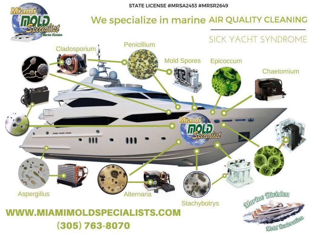 yacht mold removal miami